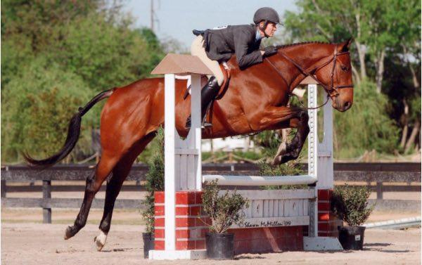 caballo pegasus