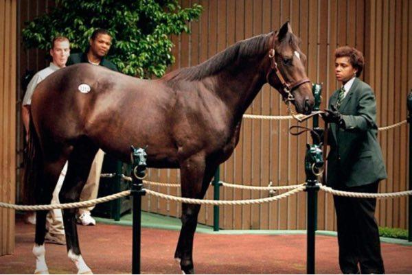 caballo plavius
