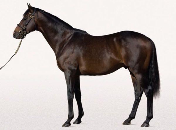 caballo shareef dancer